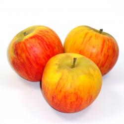 pomme-reine-des-reinettes